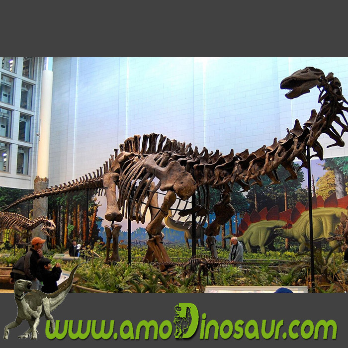 The China distributor of dinosaurs fossilizations replicas Diplodocus