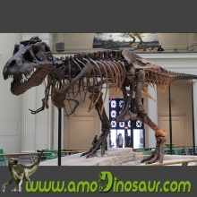The China wholesales of colorful T rex dinosaurs fossils replicas