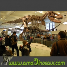 High detail lifesize T rex dinosaur fossil replica